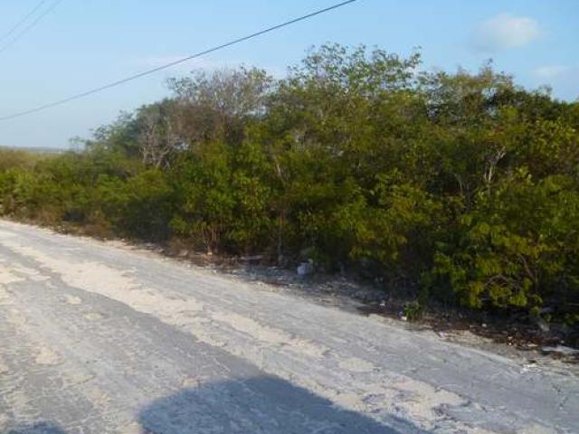 Jamaica Drive