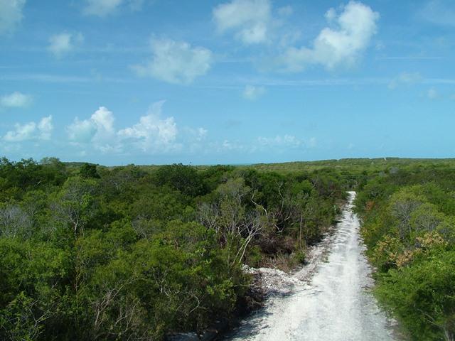 Seahorse Drive