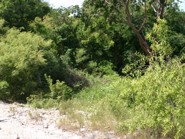 Silver Perch Lane