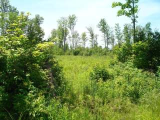 MLS# 147098 - NEAR PETERSON RD  WI 54409