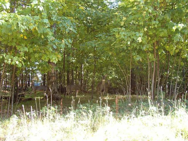 This parcel is located only 5 miles from Phelps which is a small community with lakes such as Long lake, North Twin and South Twin Lakes. The lot is heavily wooded, has a beautiful drive into the spot the lot is located. This subdivision is has many fine homes some over 1 Million dollars. Each lot is very large and buildings are placed so that everyone has privacy. There is a very nice waterfront lot on Long Lake a short distance away with a pier for the use of the owner of this lot. There is also a driveway cut into the lot. Fire # 930.