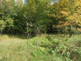 NICOLET HILLS LOT #16 - Beautiful 5 acre lot in Nicolet Hills Subdivision. Halsey Lake offers 512 surface acres and is just steps away. The lot has an abundance of mixed hardwoods and wildlife and is adjacent to the Nicolet National Forest. Come North and build your dream home or cabin.