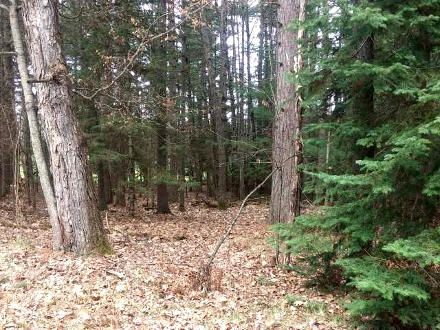 Perfect wooded lot ready and waiting for you to build your dream home. Located with a view of the 17th hole, the lot is level and located in the City of Eagle River. There are only two lots in this area remaining and this is one. The adjacent lot can also be purchased for a more spacious and private setting. If you are a golfer or not take a look at this one!