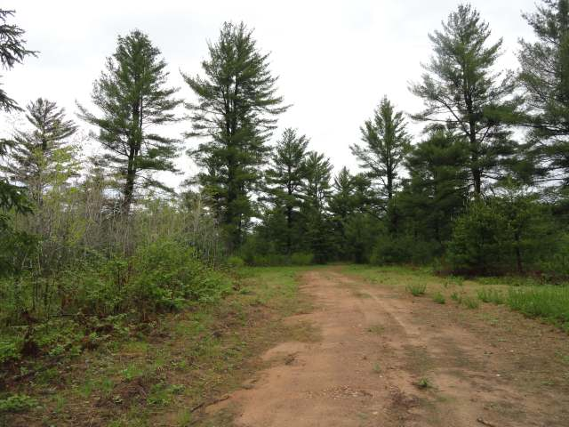 Nostalgic for the quiet days and ways of the Northwoods? Build your cabin for base camp or your year round home amongst the towering White Pines of this 5+ acre parcel bordered on the east by State Land. All highland, wooded and level Town of Plum Lake lot is just half a mile outside of the quaint town of Sayner. Not far from the Plum Lake Boat landing, Plum Lake Golf Course, library, museum, Sayner Pub, gas, numerous shops, baseball park, tennis courts and play ground. Close access to Snowmobile Trail 10 and thousands of acres of Northern Highland American Legion State Forest lands. Lot is guaranteed to perc and offers exceptional privacy for your new home. Additional Lots off Birch Springs Rd also available - Lots 2-4, each 5.13ac for $44,900; Lot 5-6 each 5.01ac for $39,900; Lot 7, 3.6ac for $29,900. Lot 1 on Hwy N, 4.14ac for $44,900.