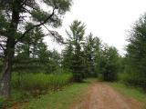 Nostalgic for the quiet days and ways of the Northwoods? Build your cabin for base camp or your year round home amongst the towering White Pines of this 5+ acre parcel. All highland, wooded and level Town of Plum Lake lot is just half a mile outside of the quaint town of Sayner. Not far from the Plum Lake Boat landing, Plum Lake Golf Course, library, museum, Sayner Pub, gas, numerous shops, baseball park, tennis courts and play ground. Close access to Snowmobile Trail 10 and thousands of acres of Northern Highland American Legion State Forest lands. Lot is guaranteed to perc and offers exceptional privacy for your new home. Additional Lots off Birch Springs Rd also available - Lots 2-4, each 5.13ac for $44,900; Lot 5-6 each 5.01ac for $39,900; Lot 7, 3.6ac for $29,900. Lot 1 on Hwy N, 4.14ac for $44,900.