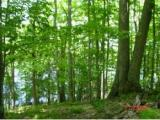 This is truly the perfect parcel of land to build your dream home located on Beaver Lake, Presque Isle, WI. The property offers large Maple trees and old growth forest leading down to the lakeshore, which is equally as impressive. This is a one of kind lot that is very Canadian like. You will be part of a private preserve and will be on a three lake chain. Beaver Lake is the smallest of the three being 68 acres in size so you will have all of the peace and tranquility of the Northwood's yet be able to access the other two lakes for cruising on your pontoon or boating with the kids. Great opportunity at an even greater piece of paradise! Lot is located close to Beaver Lake boat landing.