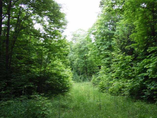 MILITARY ROAD LOT - Located just 12 miles east of Eagle River and set in the heart of Nicolet National Forest Lands is where you'll discover this nicely wooded 1.65 acre vacant parcel. This lot has nice building sites, access to electric off of the paved town road, adjoins public land at one corner, and is just across the road from the Blackjack Wilderness area! Surrounded by many quality Vilas and Forest County lakes, this desirable area offers easy access to all water sports and fishing activities, cross country skiing/snowshoeing/hiking/snowmobile trails and the priceless tranquility you can only find here in the beautiful Northwood's of Wisconsin. This lot is the perfect setting and price point for your dream home or vacation escape!