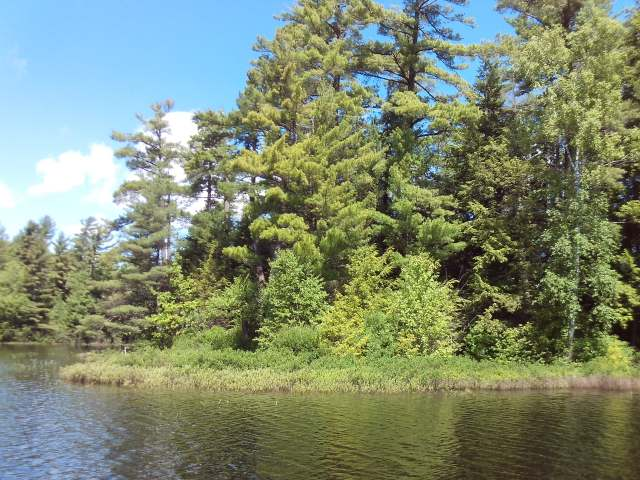 """The perfect lot for the outdoor enthusiast and the ideal location to build your Northwood's dream home! Located on Muskesin Lake in the township of Lac Du Flambeau, this level """"peninsula"""" lot offers 1 acre of beautifully wooded land with 775 feet of shoreline on this highly sought-after lake. This lot boasts beautiful panoramic lake views for your enjoyment! The electric, sand point well and cleared building area on the property will add to the quick building process!"""