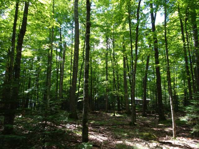 Big St. Germain Access Lot. Half Acre wooded level lot at the end of a cul-de-sac that backs on a wooded outlot. Forest Downs subdivision owners share 700 feet of sandy lake frontage with boat landing, pavilion, large park like lot with piers. Conveniently located close to grocery, gas, shopping, recreation, hiking/biking, snowmobile & ATV trails, 18 hole golf course, mini golf, go carts, supper clubs, restaurants & bars of all kinds. Big St. Germain chain of over 1800 acres has musky, panfish, bass, northern, trout & walleye. Enjoy St. Germain's lively local events like Monday flea market, Wed Sumer concerts, Pig In The Pines, numerous run/walk events, and holiday festivals & parades and so much more. A town centrally located between Minocqua and Eagle River and in Vilas County that has over 1,300 lakes, 73 rivers and streams and one-half million acres of forest lands.