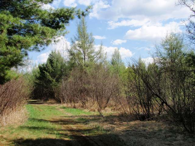 ADAMS ROAD 40 ACRES - Nice, large vacant land parcel just a few minutes from Eagle River! Level terrain and great privacy off a paved town road with electric service at the road. Convenient, affordable, zoned All Purpose with easy snowmobile trail access, and ready for you!