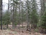 Wow, what a great Northwood's acreage parcel. This 32 acre parcel offers a great blend. It is located in an area of a high volume deer population with trophy sheds found consistently. It makes sense as the private parcel boarders almost 6,000 acres of county land. The parcel has mature forest, low lands with prime island features, and 1,000 ft. of frontage on a small undeveloped lake. The location is great, being located between Minocqua, Tomahawk and Rhinelander. If you are coming from the south it will knock precious time of your trip. There is also a prime Northwood's cottage that boarders this parcel on Alva Lake with sand beach and crystal clear water that could be purchased separately. A rare opportunity.