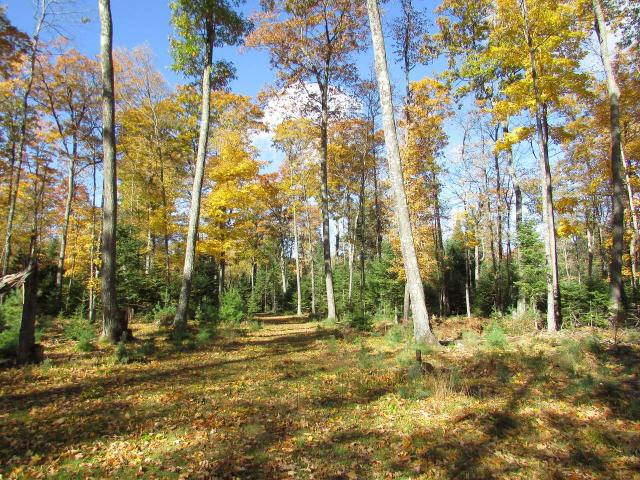 Looking for a home or cabin building site that's a short drive from town for convenience, but is in a quiet, private area loaded with wildlife including deer, grouse and turkey? This gently rolling, lot offers 16.5-acres of mixed woodlands for privacy, hunting, or just relaxing. There are several nice & level building site options with a grass/gravel trail that allows you to drive through the majority of the property. Utilities are available along Juve Road, a paved town road road only two miles from the fine dining, fleas market & other conveniences St. Germain has to offer northwoods enthusiasts. There are many full recreational lakes nearby and lots of public land nearby for hunting or just exploring. Other local recreational activities include fishing, biking/hiking trails, ATV/UTV, hundreds of miles of groomed snowmobile trails, & golf courses. Storage shed & elevated deer blind included. Your family and friends will enjoy this property for years.