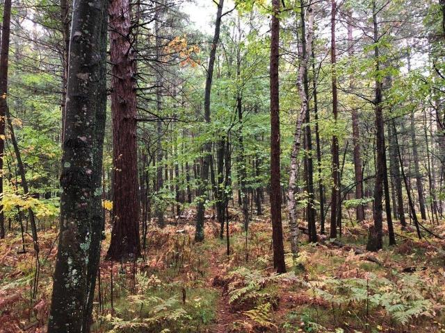 Looking for a nice country building lot in the outskirts of town to plant your roots? Here are 2.81 acres of wooded land in the Crescent Flats area south west of Rhinelander. This nice lot is on a private gravel road that offers power and phone utilities, and is very close to Lake Emma. Close to ATV and Snowmobile trails, biking trails and public hunting lands.