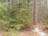 Perfect in the forest location. Close to some of the best fishing lakes like Franklin and Butternut Lakes. This property is nicely wooded with wildlife all around you. There is a driveway cut into the property. Get this spot for your cabin in the northwoods.