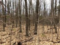 Here is an opportunity you do not want to miss! You want privacy to build your Northwoods Dream Cabin? Look no further! This 5 acre lot has it ALL! All outdoor activities are at your fingertips with peace and tranquility to boot!