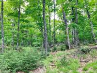 Great opportunity to own a heavily wooded old growth lot on the corner of Wildcat Rd and CTH B in Presque Isle. This lot offers 20.5 +/- acres with 1,500ft +/- of highway frontage. Do not miss your chance to see this property today!