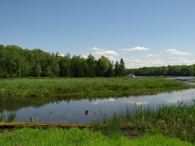 Catfish Lake lot picture