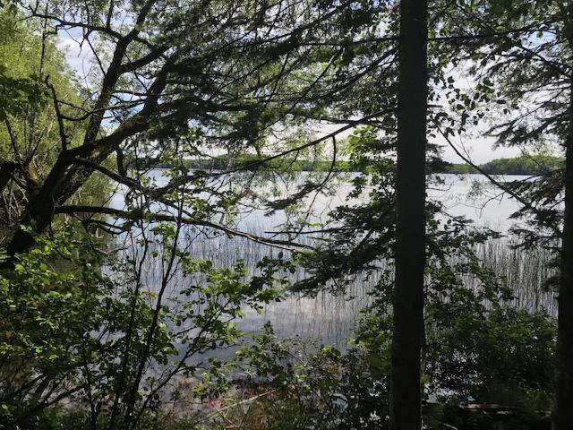 Horsehead Lake lot picture