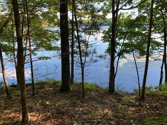 Arbutus Lake lot picture