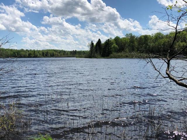Birch Lake lot picture